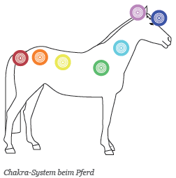 chakra-pferd